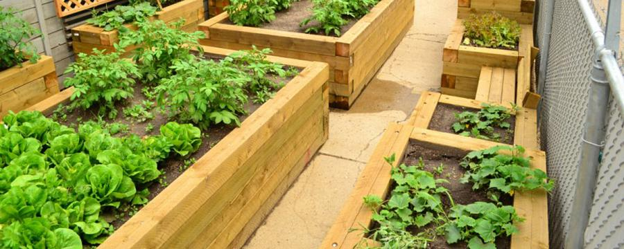 Garden For Previously Street Involved Individuals